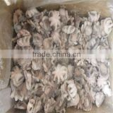 best season frozen baby octopus for sale
