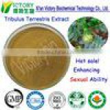 Chinese Tribulus terrestris Tribulus terrestris extract Tribulus terrestris extract powder