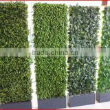 2013 New Artificial leaf hedge garden fence gardening olive leaf extract powder