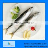 frozen mackerel pacific horse mackerel