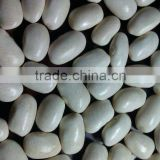 Organic Great Northern Beans/Medium white kidney bean( 2010 crop, heilongjiang origin. hps quality)