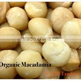 Organic Macadamia Nuts (Whole Beans)