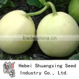 Yinmi Early mature white skin sweet melon seeds