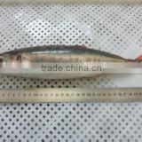 Frozen Seafood Red Tail Horse Mackerel Fish To Supply
