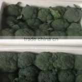 Hot sale Fresh broccoli/green broccoli from factory