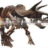 Dinosaur Skeleton Model for Sale Life Size Skeleton