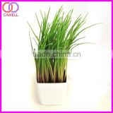 export cut foliage and plants