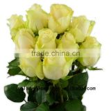 Promotional flower backdrop black rose bushes for sale peach avalanche rose for decoration from yunnan
