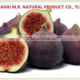 Natural green organic Fig Dried Fruit Extract Powder
