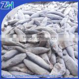 frozen fish bait fishing wholesale sardine mackerel