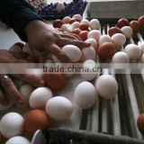 Farm Fresh Chicken Brown & White Table Eggs for sale