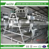Animal & Poultry Husbandry Equipment 2m layer hen cage
