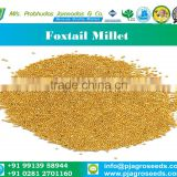 Foxtail Millet from India