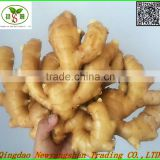 2016 Wholesale organic fresh ginger price