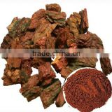Natural herbal medicine Pine Bark Extract powder