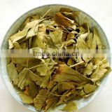 natural ginkgo biloba leaves 100% organic free pesticide