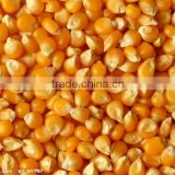 NON GMO organic yellow maize/corn from Africa