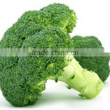 Chinese fresh broccoli price