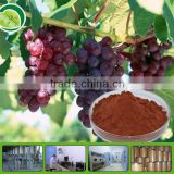 Competitive Price for Natural dried grape powder