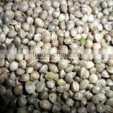 bird feed hemp seed