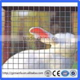 Cheap 1/2 inch square hole galvanized welded wire mesh in roll for rabbit cage (Guangzhou factory)