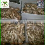 2016 Air- dried Ginger (Packing in bag or box)