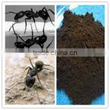 Changbaishan Wild Ant powder Best price for you