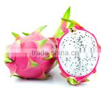 dragon fruits ,wholesale fresh dragon fruits 2016 new crop made in Vietnam