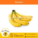 Fresh Yellow Banana for Sale
