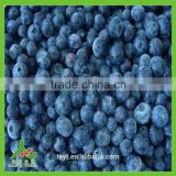frozen iqf wild cultivated blueberry