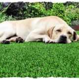 #306814 Pet Artificial Grass supplier
