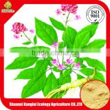 Chinese Traditional Herb Leaf & Stem Panax Ginseng Extract Powder with Free Samples Provided by Professional Manufacture