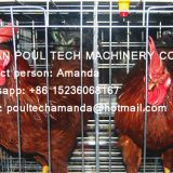Panama Chicken Farm - A Frame Battery Hen Cage & Battery Female Male Chicken Cage Used in Poultry Farm
