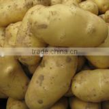Promotion Offer Mesh bags packede Potato