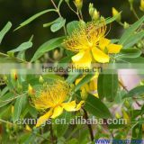 St. John's Wort Extract 0.8% Hypericin Test by UV Anti Depression