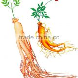 Ginseng Root Extract FOR Pharmaceutical stuff