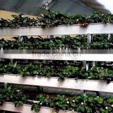 Hydroponic gully for large crops food grade