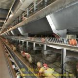 poultry house dimensions_shandong tobetter modern design