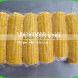 FROZEN BOILED CORN GOOD QUALITY FROM VIETNAM