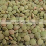 Green Lentil beans with hign quality