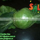 Fresh Chinese Round Cabbages