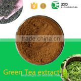 2016 wholesale Green Tea Extract EGCG slimming tea for weight loss