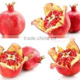 100% Natural Pomegranate Plant Base Factory Pomegranate Peel Extract /Ellagic acid >40%~90% / Punicalagin >40%