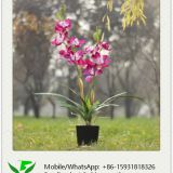 80cm Artificial Orchid in Plastic Pot
