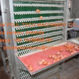 South Africa Chicken Farming Hot Galvanized Cage A Type Battery Laying Hen Egg Cage & Layer Chicken Coop with 120 birds in Shed