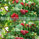 Black Extruded Plastic Mesh Agricultural Bird Netting For Vineyard,Apple Trees,Strawberry Garden And Other Agricultural Area