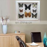 Real Butterfly Mounted in Frames - Decoration & Gifts