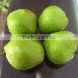 New crop Su pear Chinese fruit fresh pear wholesale