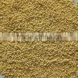 Hulled broomcorn millet (yellow millet ) with the best price