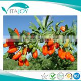 Health Care Product Fructus Lycii Extract GMP Manufacture Direct Supply Barbury Wolfberry Fruit Extract